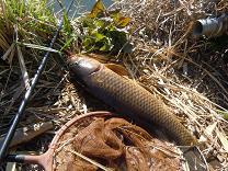 今日もイメージを釣りに・・・011 寒さだらしなく口角より落つ _c0121570_1334747.jpg