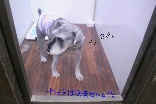 b0130018_20103531.jpg