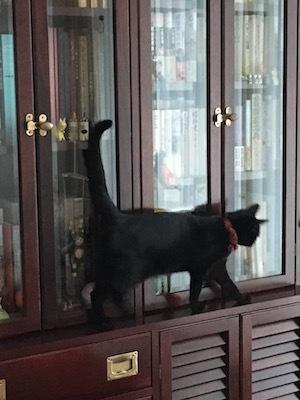 黒猫さまのお通りだい_e0359436_15351211.jpg
