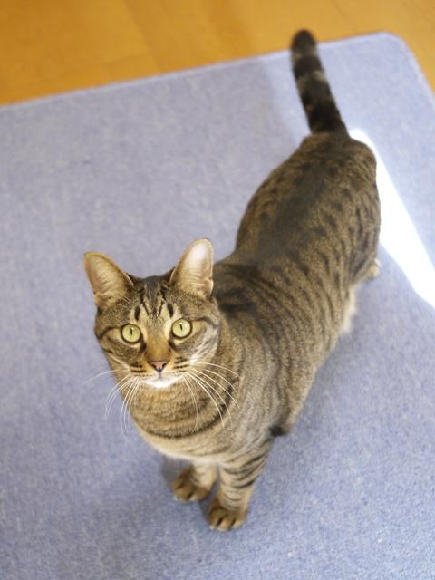 猫のお留守番 メイちゃん編。_a0143140_221136.jpg