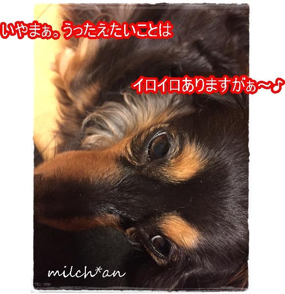 b0115642_8355287.jpg