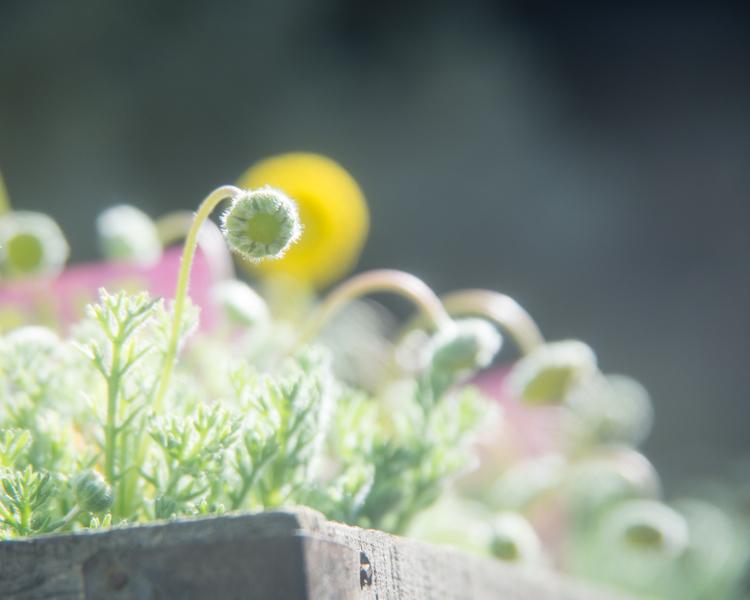 春の隣。_b0022268_19460110.jpg
