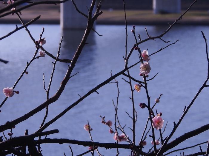 梅林寺の梅の花_a0149488_17242897.jpg