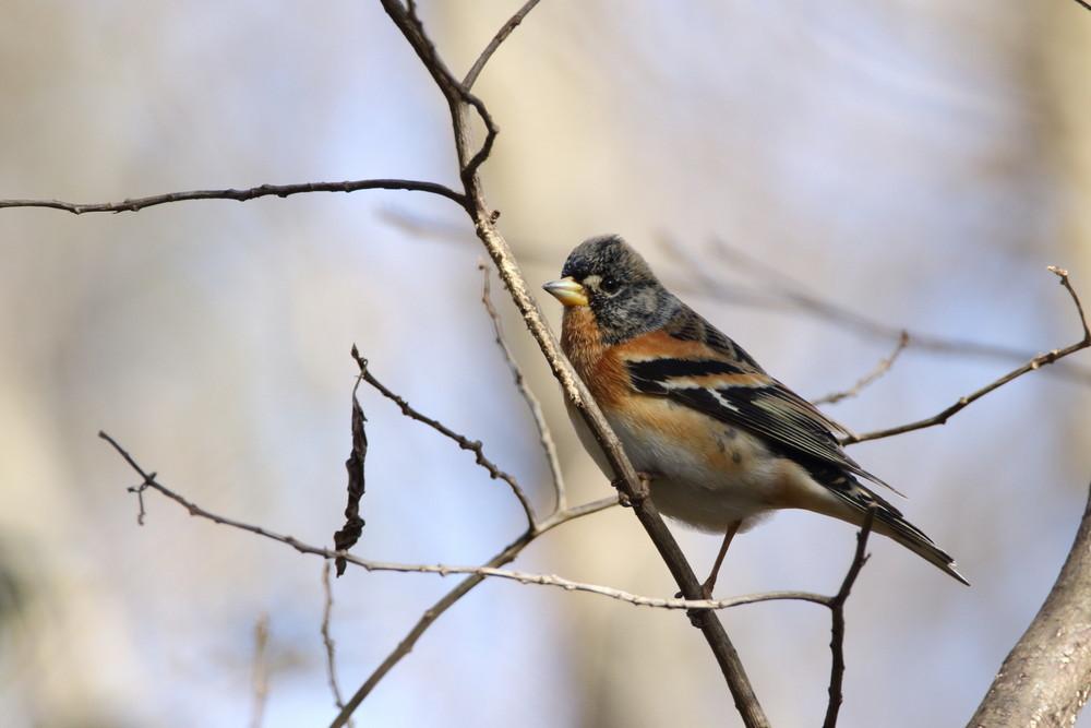 今日の鳥見(2017年2月25日)_f0235311_00163041.jpg