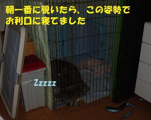 f0121712_15215885.jpg