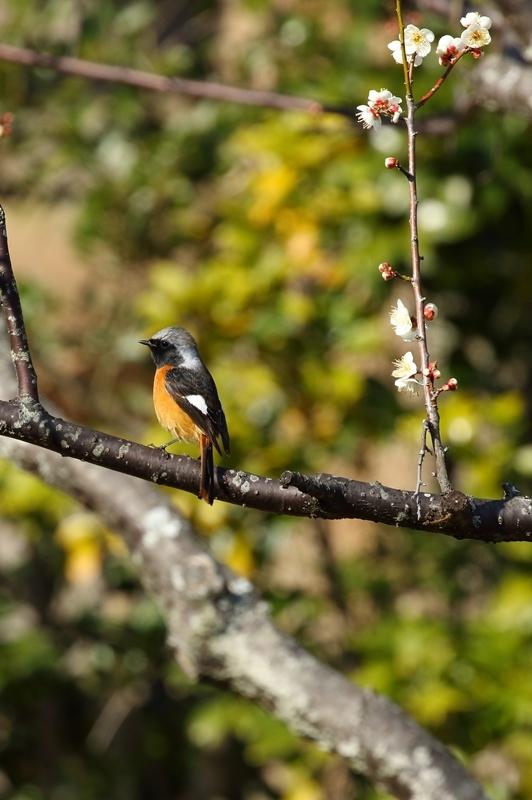 鳥を撮ってみる_e0364223_17140755.jpg