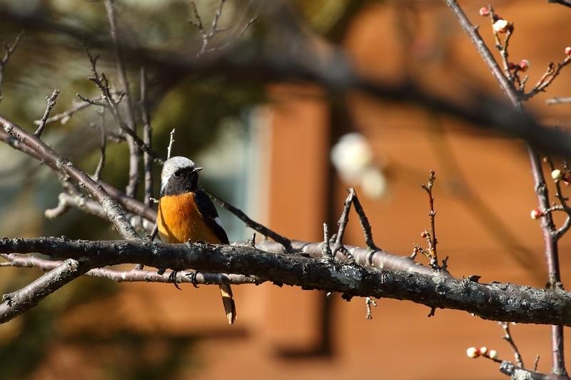 鳥を撮ってみる_e0364223_17142129.jpg