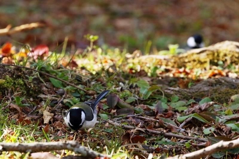 鳥を撮ってみる_e0364223_17144205.jpg