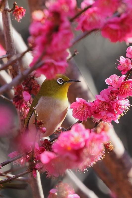 鳥を撮ってみる_e0364223_17145616.jpg