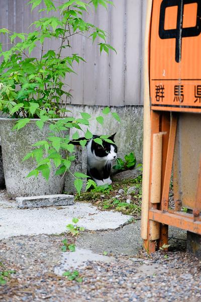 世界から猫が消えたなら_e0344430_06423332.jpg
