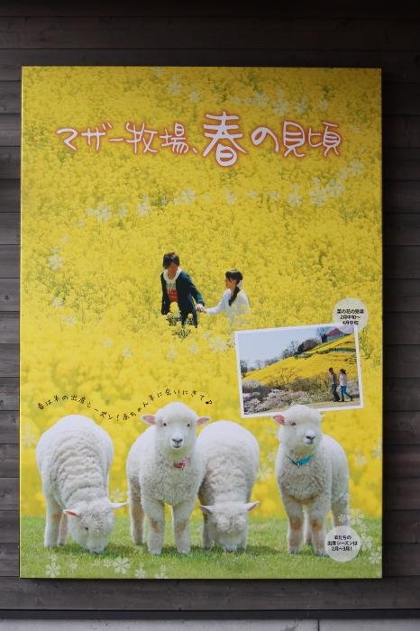 【マザー牧場 】_f0348831_11502420.jpg