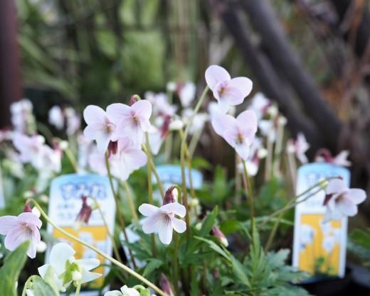 春が来ました!!_f0139333_23054656.jpg