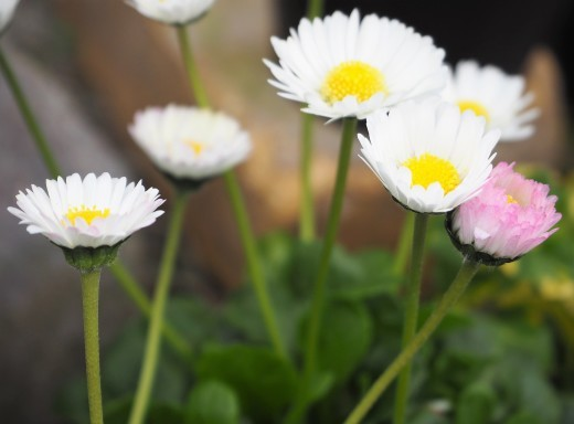 春が来ました!!_f0139333_23115076.jpg