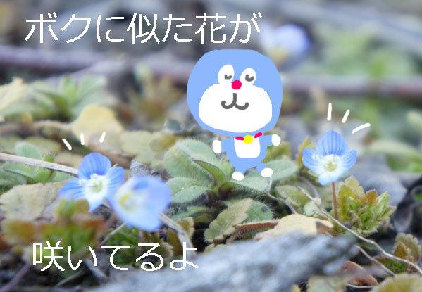 f0368538_13305471.jpg