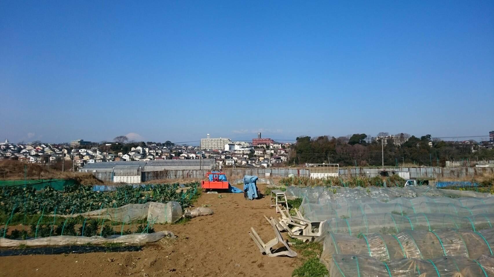 今朝は 蚕豆のネットを外し 雑草取り 通路草刈り エンドウ豆の櫓建て開始します_c0222448_14331257.jpg