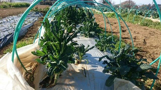 今朝は 蚕豆のネットを外し 雑草取り 通路草刈り エンドウ豆の櫓建て開始します_c0222448_14332529.jpg