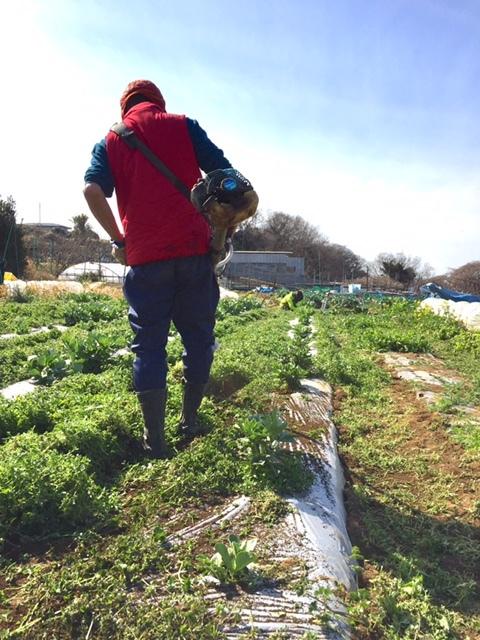 今朝は 蚕豆のネットを外し 雑草取り 通路草刈り エンドウ豆の櫓建て開始します_c0222448_15124875.jpg