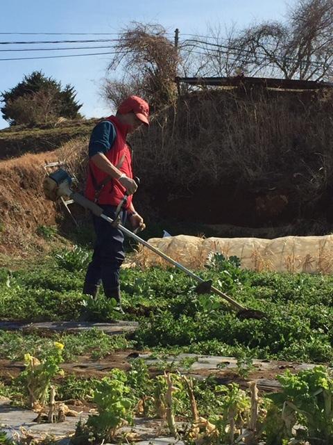 今朝は 蚕豆のネットを外し 雑草取り 通路草刈り エンドウ豆の櫓建て開始します_c0222448_15132779.jpg