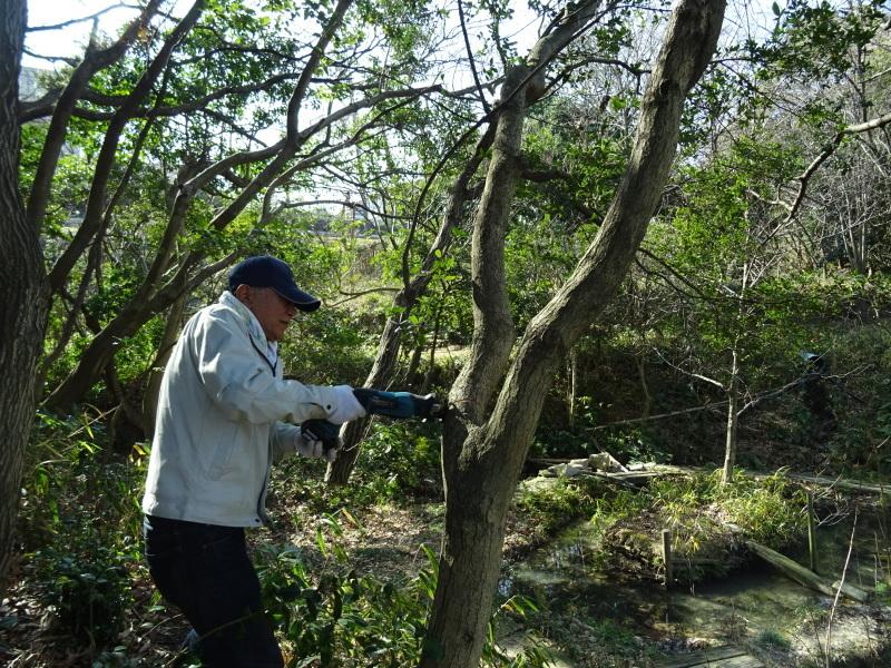 木を切ると元気が出るシルバーたちです・・・うみべの森_c0108460_20452273.jpg