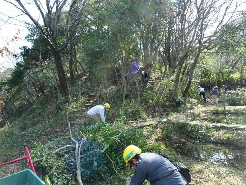 木を切ると元気が出るシルバーたちです・・・うみべの森_c0108460_20454699.jpg