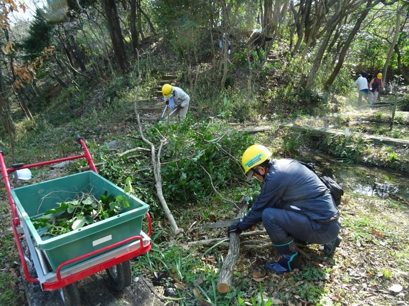 木を切ると元気が出るシルバーたちです・・・うみべの森_c0108460_20460690.jpg