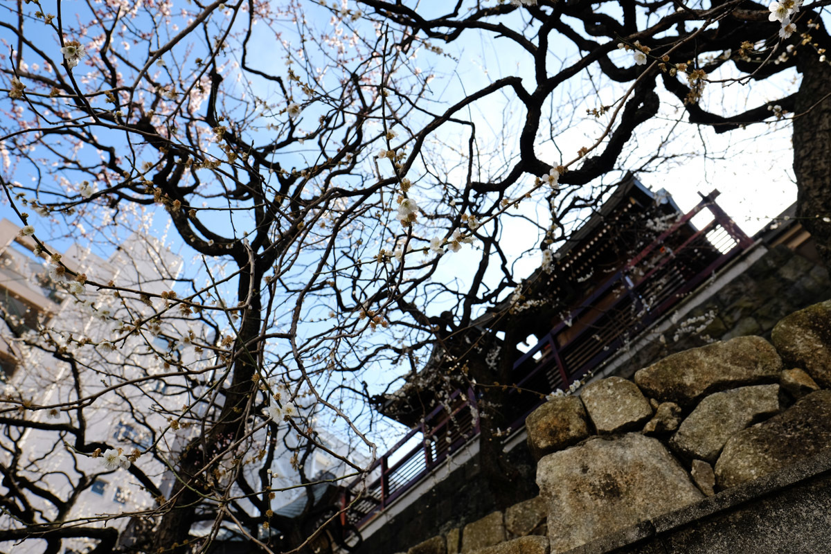 梅に願掛け春を待つ_c0084666_16564212.jpg