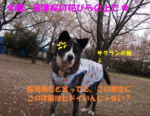 f0121712_14543385.jpg