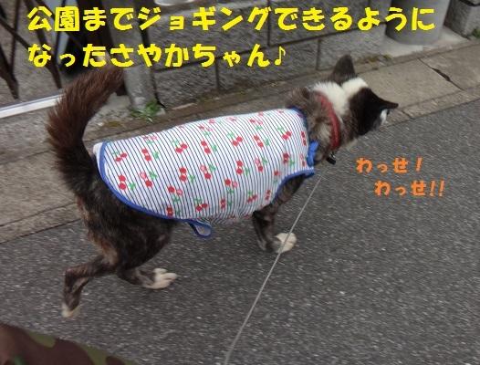 f0121712_14543801.jpg