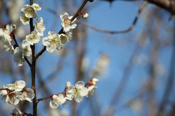 春。_c0120834_19402882.jpg