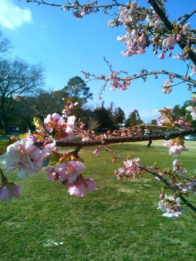 春。_c0120834_19403251.jpg