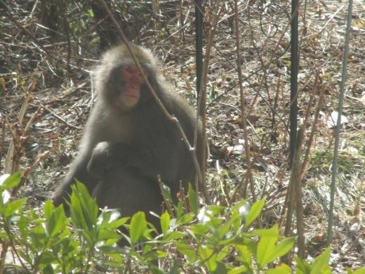 三匹の猿_d0127634_10254740.jpg