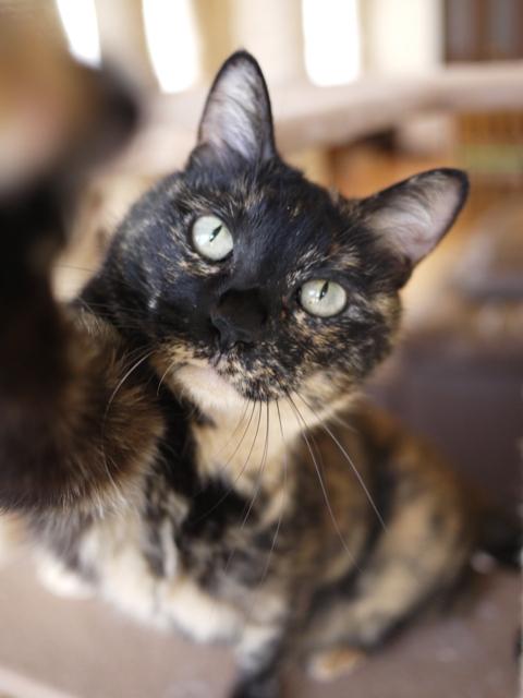 猫のお留守番 ワサビちゃん天ちゃん麦くん茶くん編。_a0143140_21255452.jpg