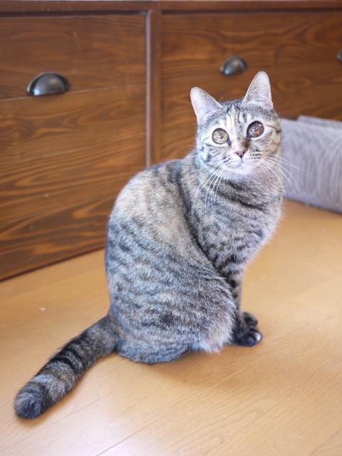 猫のお留守番 ワサビちゃん天ちゃん麦くん茶くん編。_a0143140_21262073.jpg