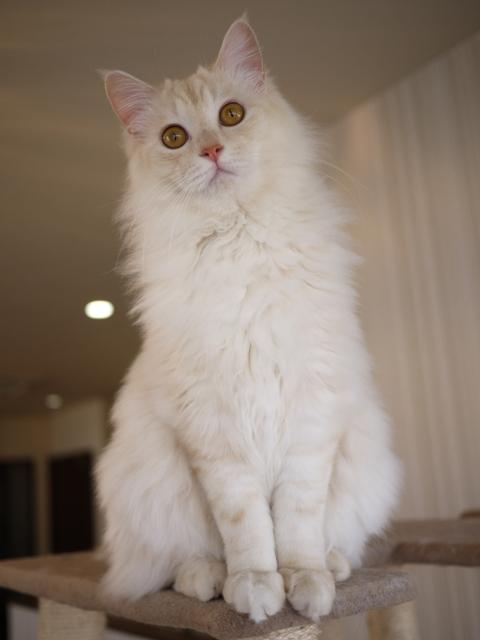 猫のお留守番 ワサビちゃん天ちゃん麦くん茶くん編。_a0143140_21271449.jpg