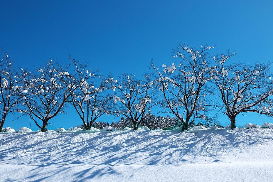 大雪上がる 4_c0067040_21363385.jpg