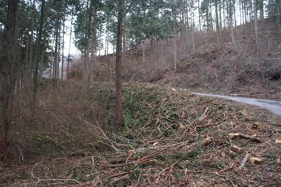 森林整備_f0114346_7241749.jpg