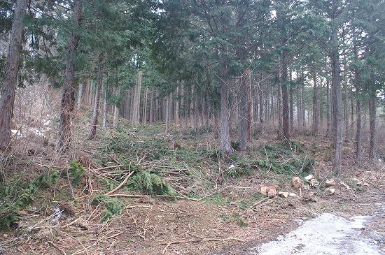 森林整備_f0114346_7295725.jpg