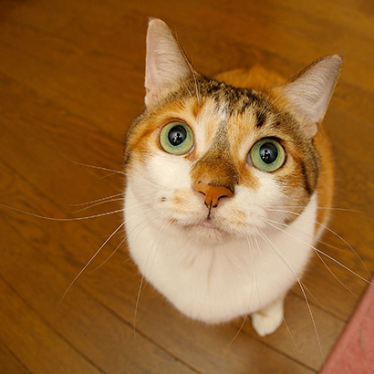 猫の日ミルクさん祭【3/2写真追加】_a0028451_01543490.jpg