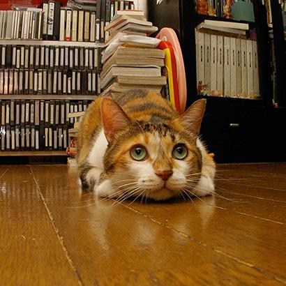 猫の日ミルクさん祭【3/2写真追加】_a0028451_01543501.jpg