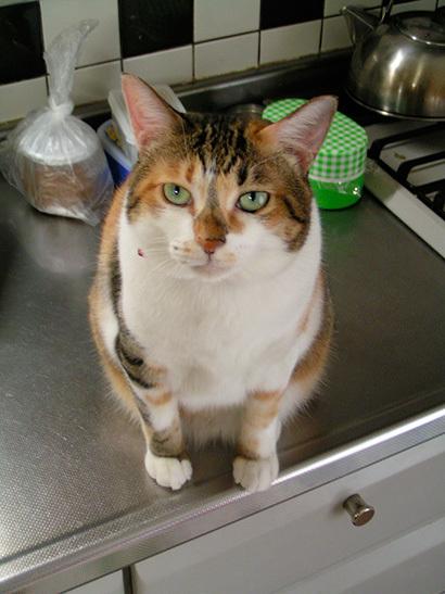 猫の日ミルクさん祭【3/2写真追加】_a0028451_01543502.jpg