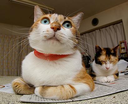 猫の日ミルクさん祭【3/2写真追加】_a0028451_01543585.jpg
