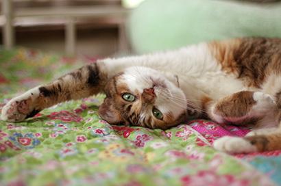 猫の日ミルクさん祭【3/2写真追加】_a0028451_01543645.jpg