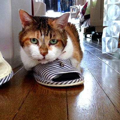 猫の日ミルクさん祭【3/2写真追加】_a0028451_01543653.jpg
