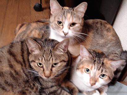 猫の日ミルクさん祭【3/2写真追加】_a0028451_01543658.jpg