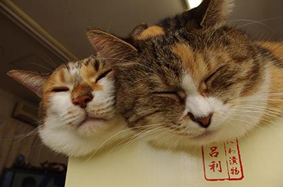 猫の日ミルクさん祭【3/2写真追加】_a0028451_01543659.jpg