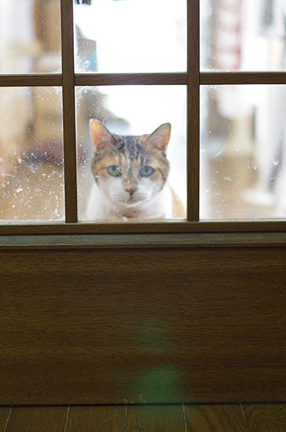 猫の日ミルクさん祭【3/2写真追加】_a0028451_02000413.jpg