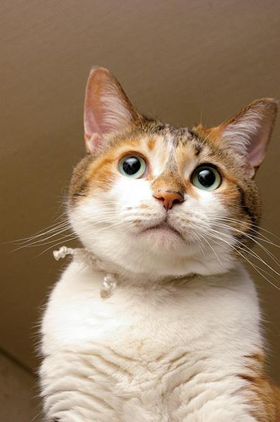 猫の日ミルクさん祭【3/2写真追加】_a0028451_02000469.jpg
