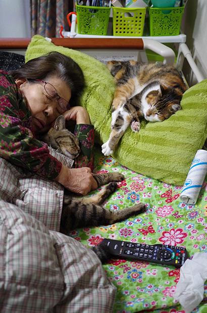 猫の日ミルクさん祭【3/2写真追加】_a0028451_02000511.jpg