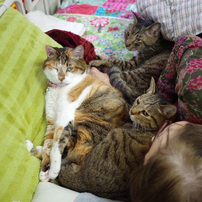 猫の日ミルクさん祭【3/2写真追加】_a0028451_02000539.jpg