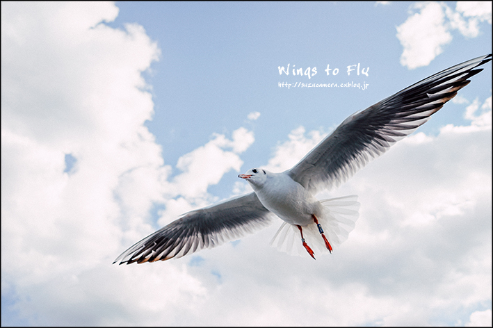 翼をください_f0100215_23495070.jpg